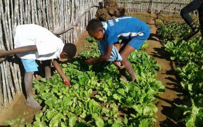 Activité agricole à l'école d'Andranomena